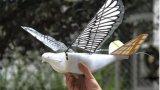 中国科学家日前成功研发出外型酷似鸟类的无人机