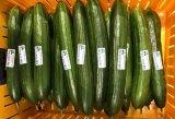 腾讯第一次种黄瓜,AI温室种黄瓜比赛