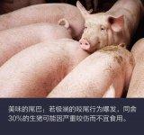 3D攝像機幫助預測生豬何時互咬尾巴