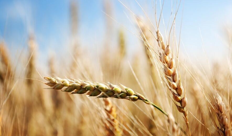 智慧农业发展基础—四种数据、三大渠道