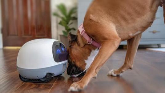 VAVA宠物机器人专为宠物提供服务 可实现远程互...