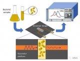 用于实时检测病原菌的新型生物传感器