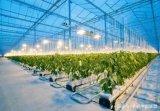荷兰瓦赫宁根大学发起的温室挑战赛──AI种黄瓜比...