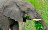 利用英特尔计算机视觉处理器保护非洲濒危动物