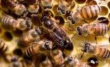 群体智能算法从生物现象中获得哪些启示