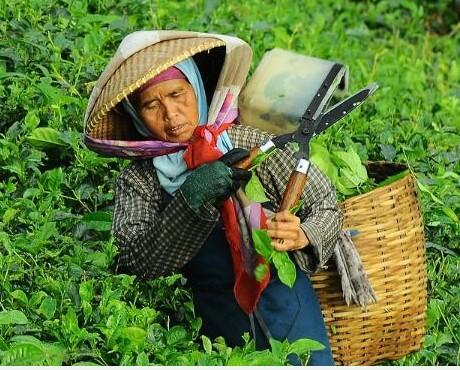 区块链在农业供应链中的主要好处有哪些
