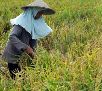 区块链技术正在为印度尼西亚地区的农民提供有用的农业数据