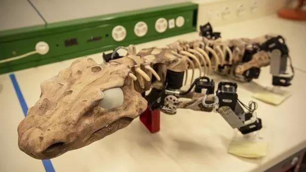 亚博仿真机器人OroBOT展示2.9亿年前的动物如何行走