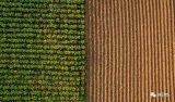 光传感器确保农作物健康生长