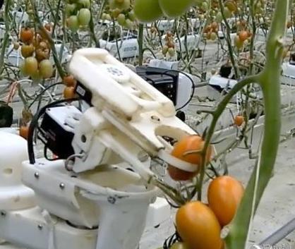 松下计划研发西红柿采摘机器人 并预计在2019年左右开始试销