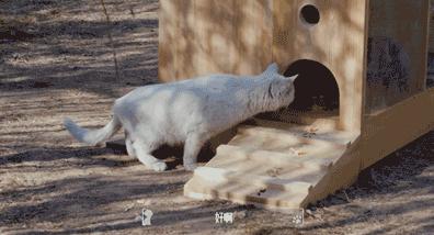 百度在北京制造了一个智能猫庇护所 用人工智能来识别猫