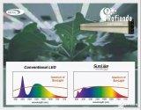 首尔半导体向罗飞安达供应实现自然光光谱的主打产品LEDsSunLike
