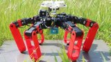 法国科学家开发出能像蚂蚁一样导航的六足机器人