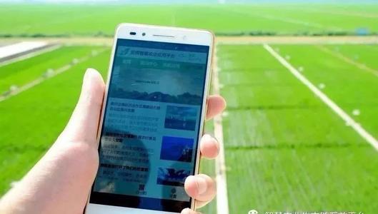 物联网科技企业已经瞄准了一个新市场智慧水稻