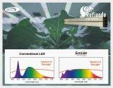 首尔半导体向荷兰Rofianda B.V.植物照明供应自然光谱LEDs SunLike