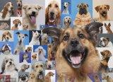 如何制作能够分类120种小狗的图像分类器