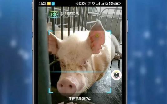 """""""猪脸识别"""",科技的创新还是只是哗众取宠?"""