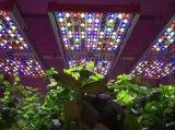 欧司朗推出了植物照明专用LED—Phytofy RL,以提升作物口感和产量