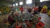 中国每年售出4~5亿部新手机,淘汰3~4亿部,废旧手机去哪儿了?