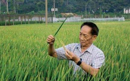 数字化改善耕地,华为携手袁隆平开发海水稻