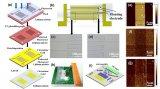 中科院半导体所和山东大学联合设计了一种声表面波细胞裂解器件