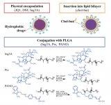 科研人员利用靶向纳米载体激活并杀死 HIV病毒