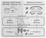 解析DARTS:海量数据训练和新样本特征的综合