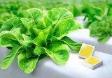 三星发布植物照明高光子效率全光谱LED器件