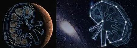 肾脏芯片预计将于4月底飞向太空空间站