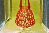 莱斯大学生物工程师开发3D打印血管网络,最终有望移植到人体器管中