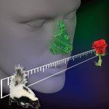 慧闻科技开发了人工智能嗅觉解决方案