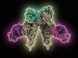 胰島素受體竟與基因表達之間存在關聯性