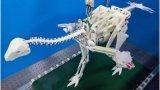 快讯:恐龙机器人探索鸟类进化过程,解锁人们对飞行...