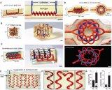"3D打印会""呼吸""的肺结构"