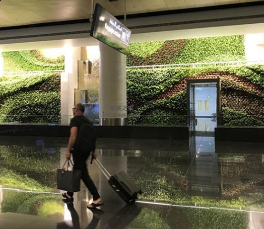 物聯網將為全球垂直花園帶來新的可能
