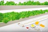 三星:园艺LED推动农业未来发展,在家就能种蔬菜