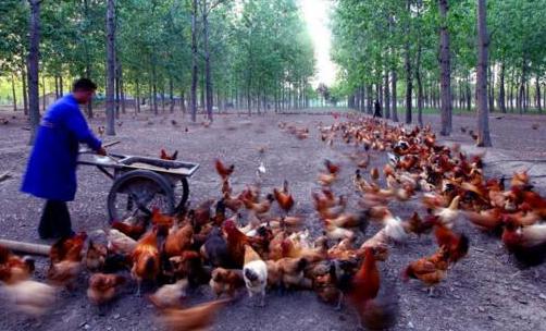 区块链技术在我国首次应用在了农业领域