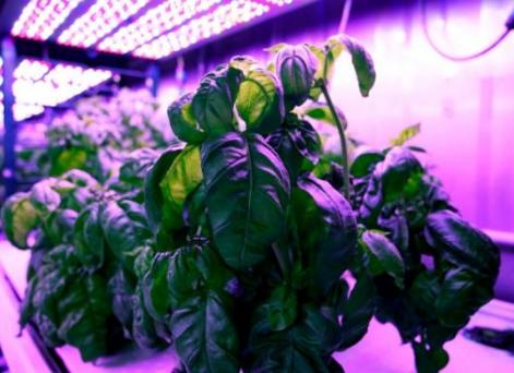 人工智能应用于农业 引领现代农业的未来
