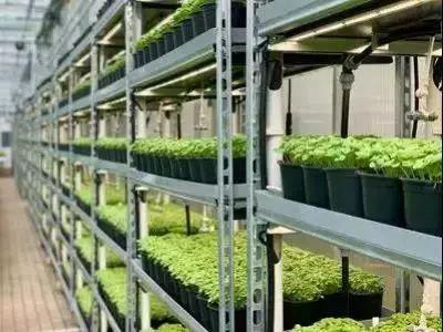 园艺LED照明市场要爆发了吗