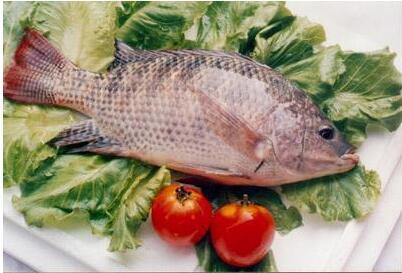 德国研究人员正在开发出一种可帮助识别肉类和鱼类是...