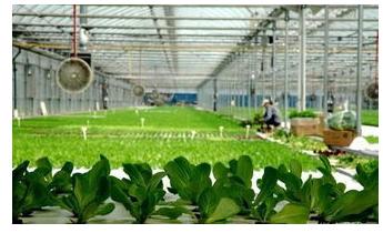 智慧农业的新格局是什么