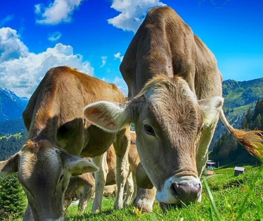 物联网是提高农业生产力和效率的关键要素