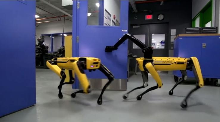 你見過網紅機器狗嗎