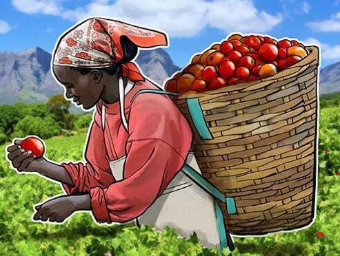 如何在農業中使用區塊鏈來改善食物的質量