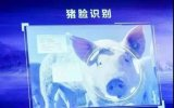 """京东切入""""养猪""""领域,打造独特""""京东猪"""""""