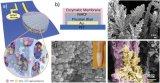 多孔酶膜构建的汗液葡萄糖传感器用于无创的健康监测