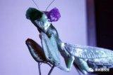 研究人员从昆虫大脑中发现用于3D视觉的神经元