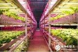 未来植物工厂也能成为中国名片