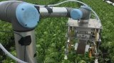剑桥工程师打造自主式蔬菜采摘机器人,成功率令人惊讶