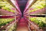 获数亿美元注资  国际LED垂直农场声势渐起